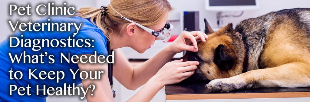 Pet Clinic Veterinary Diagnostics: What's Needed to Keep Your Pet Healthy?